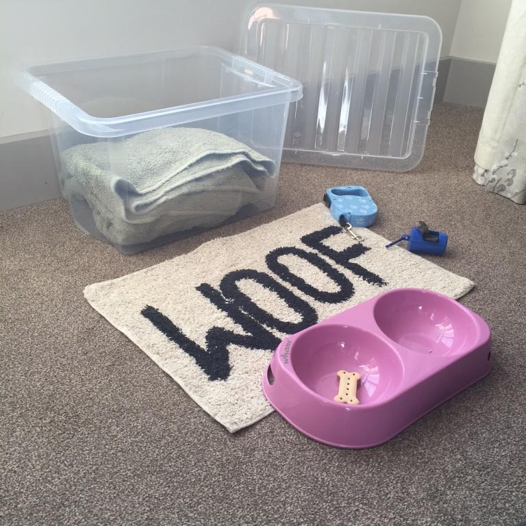 Dog Friendly Box