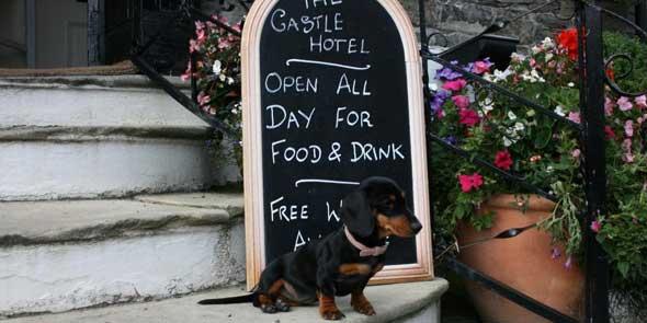 The Castle Hotel viscious guard dog Millie