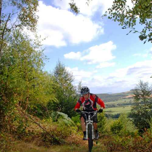 Mountain biking in Eastridge Woods, Shropshire